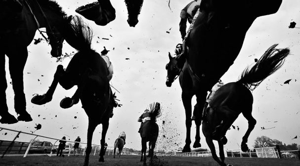 Horses_1040x585